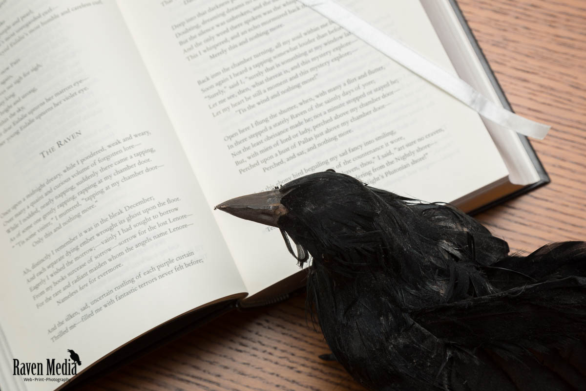 My Raven Reading The Raven